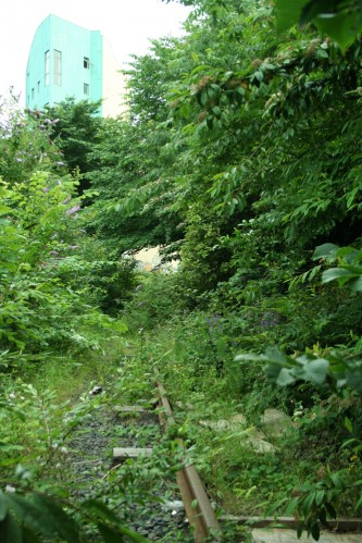 A disused railway line overgrown with trees, wild flowers, plants