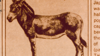 A newspaper cut out of a print of a donkey