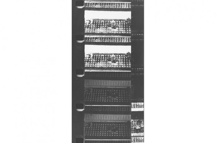 Several 16mm film frames of a stairway covering both image and sound areas