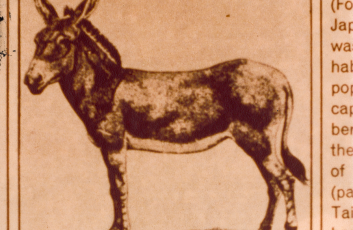 a newspaper clipping of a drawing of a donkey, side on
