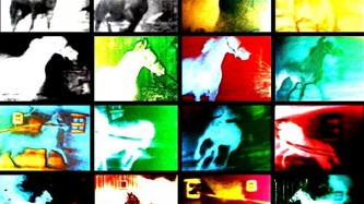 Several frames of different saturated colours of a horse in motion