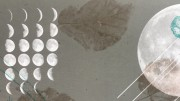 A design showing phases of the moon and the skeletons of dried leaves in montage