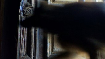 The blurry figure of a dog crosses the camera, entering a doorway